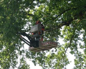 Sleen: onderhoud aan bossingels en laanbomen