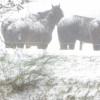 Winter in Sleen (2)
