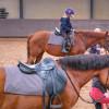 Open dag paardensportcentrum trekt bekijks