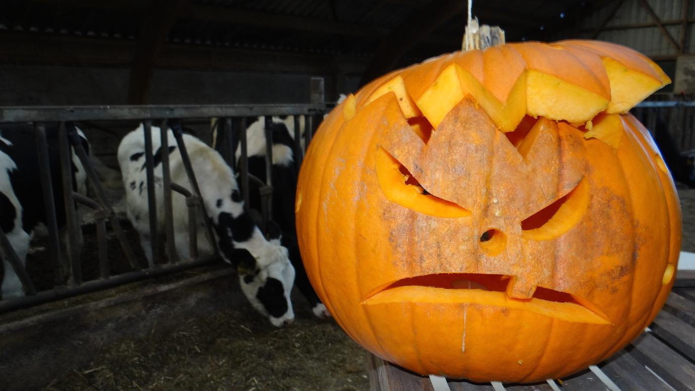 Uithollen Pompoen Halloween.Sleenweb Nieuws Sleen Pompoen Uithollen Op De Boerderij